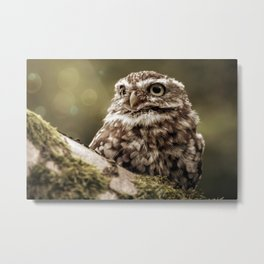 Owl bekon light Metal Print