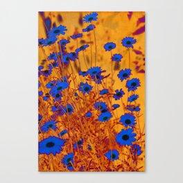 Luminous Daisies Canvas Print