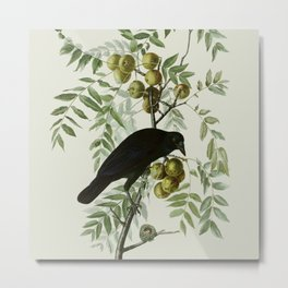 Vintage Crow Illustration Metal Print