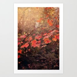 Autumn Leaves of Red Art Print