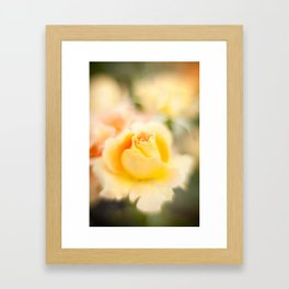 Rose yellow Framed Art Print