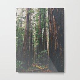 The Redwoods Metal Print