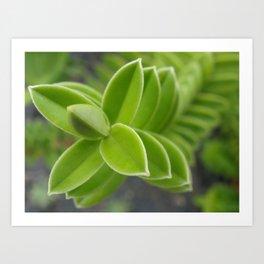 Plant! Art Print
