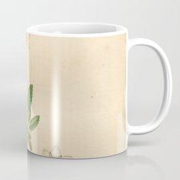 Flower Dryas octopetala27 Coffee Mug