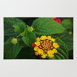Red and Yellow Lantana Flower and Green Leaves Rug