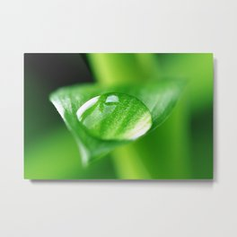 Bamboo with water drops pictures Metal Print
