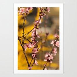 Pink Spring Surprise infront of Yellow Wush Art Print