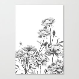 black and white peonies Canvas Print