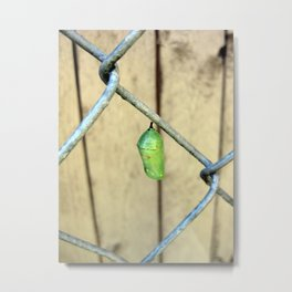 Monarch Chrysalis  Metal Print