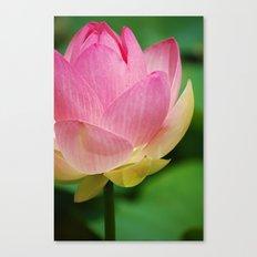 Lotus Blossom Flower 26 Canvas Print