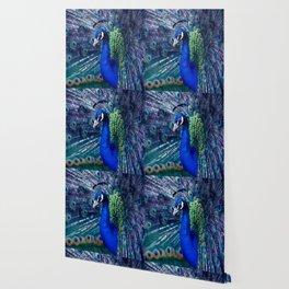 Blue Peacock Wallpaper