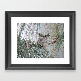 Pine Veil Nesting Framed Art Print