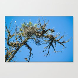 Treehuggers Canvas Print