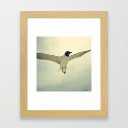 bird 2/3  by akashidan Framed Art Print