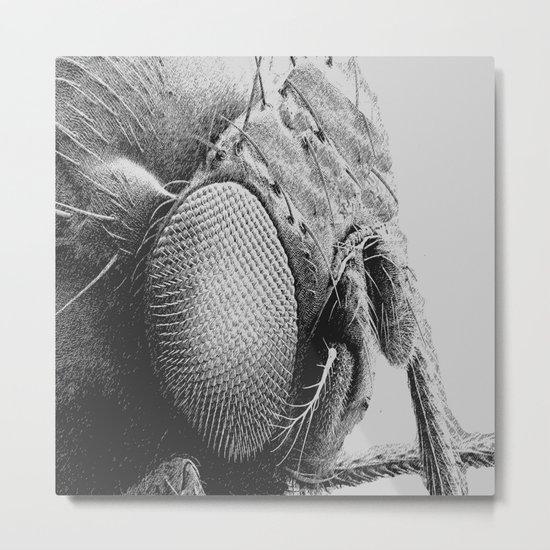 Shoo Fly  Metal Print