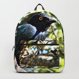 African Blue Bird Perched Tree Branches 2 Backpack