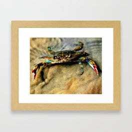 Blue Crab Framed Art Print