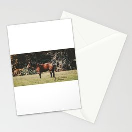 Lone Mare Stationery Cards