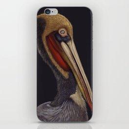 Brown Pelican - Pelecanus occidentalis iPhone Skin