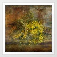 Mimosa Flowers Art Print
