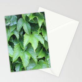 Boston Ivy Stationery Cards