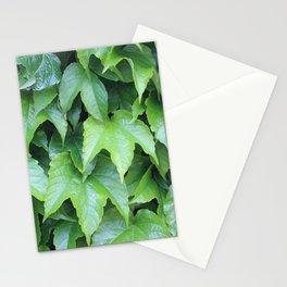 Boston Ivy Stationery Cards