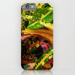 Tropical Croton Plant iPhone Case