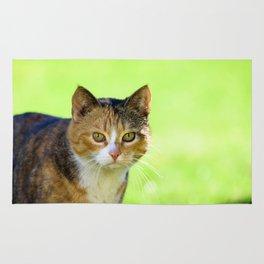 Beautiful mottled cat in garden. Rug