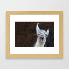 Young Lama with a big mouth | Junges Lama mit grosser Klappe Framed Art Print