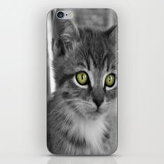 Through the eyes of a kitten iPhone & iPod Skin