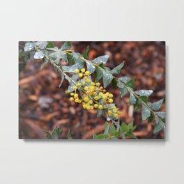 Rain - Mimosa Metal Print
