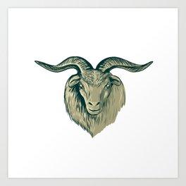 Cashmere Goat Head Drawing Art Print