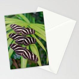 Zebra longwing butterflies Stationery Cards