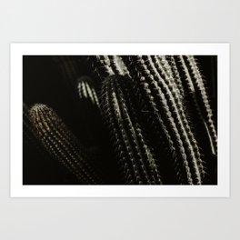 Botanical garden green cactus - Lanzarote, Canary island - Travel art photography  Art Print
