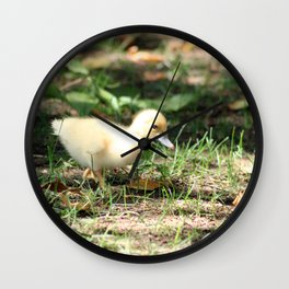 Baby Duckling strolling on a lawn Wall Clock