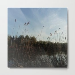 Nature and landscape 5 reed Metal Print