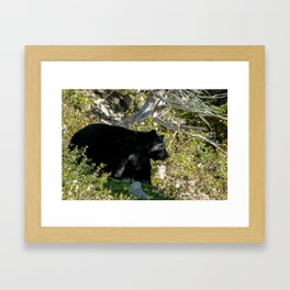 Black Bear On Watch Framed Art Print