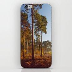 Rising Sun And Tree iPhone & iPod Skin