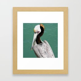 Brown Pelican Upstanding Framed Art Print
