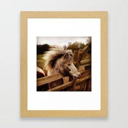 Windswept Pony Framed Art Print