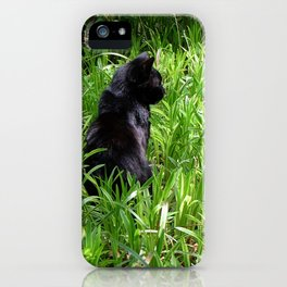 Cat, lawn and sunny day iPhone Case