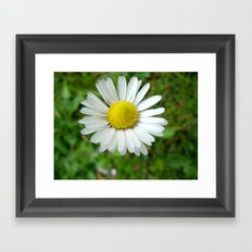 White Flower Daisy Framed Art Print