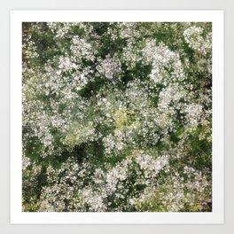 when coriander blossom.. Art Print