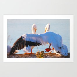 Pelican Wooing II aka Best Friends Art Print