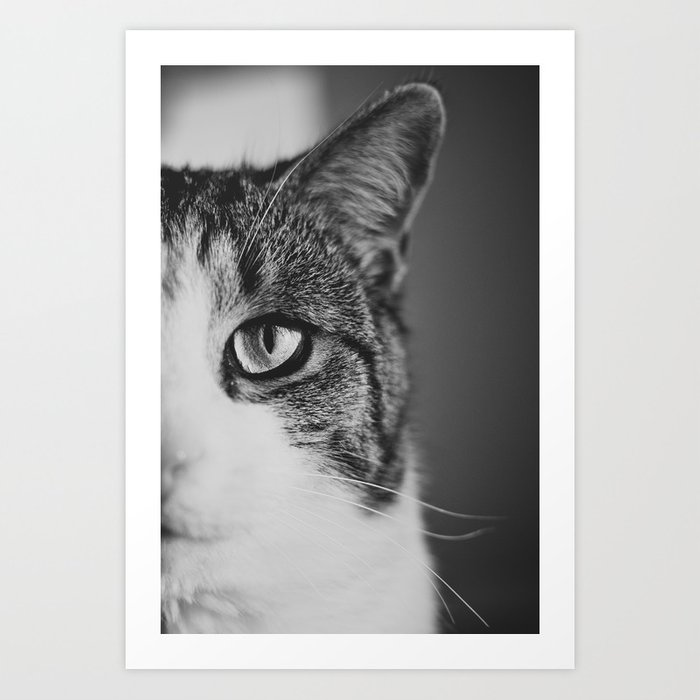 Cat Eye Art Print