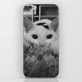 kitty ready to pounce iPhone Skin