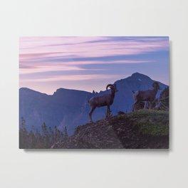 Bighorn At Sunrise Metal Print