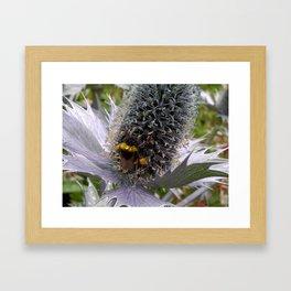 Prickly Pollen Framed Art Print