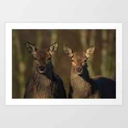 Red Deer Posing Art Print