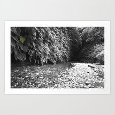Fern Canyon Art Print